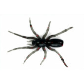 "Perchik Tiny Spider 1.1"" 18"